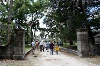 Cumberland Island Photos